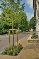 Ortskernsanierung Gemeinde Bad Laer_6